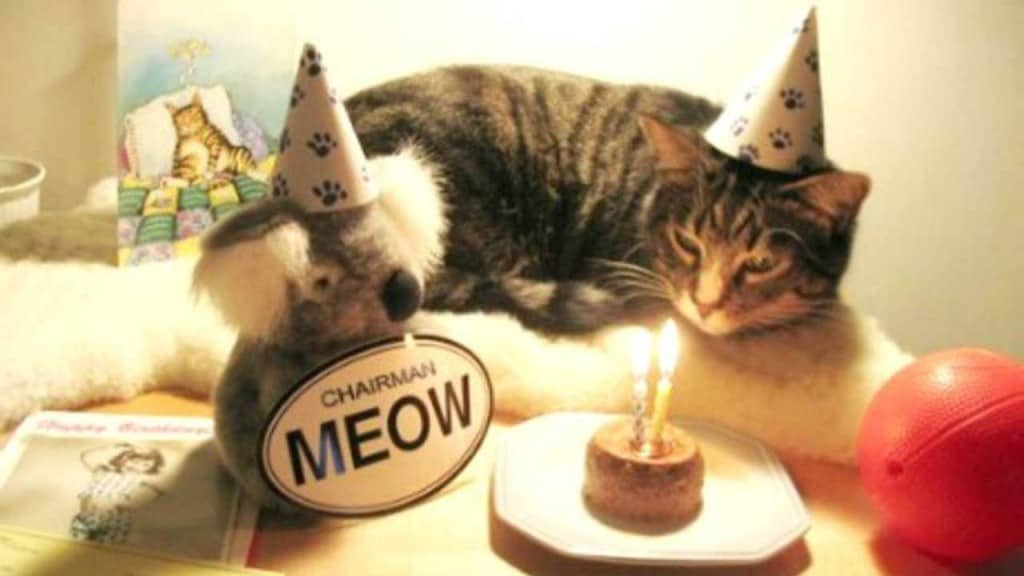 Cute Kittens Funny Wallpaper 17 Cute And Funny Photos Of Animals Celebrating Birthdays