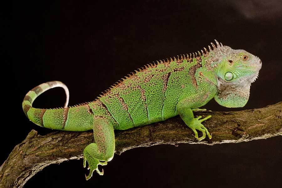 Animal Planet Wallpaper 10 Of The Most Dangerous Reptiles In The World