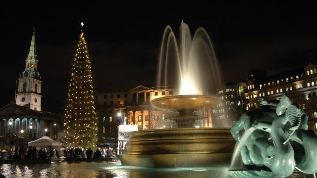 Christmas Tree at Trafalgar Square  Whats On
