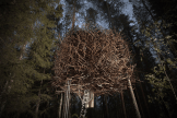 Treehotel (2)_Luxe