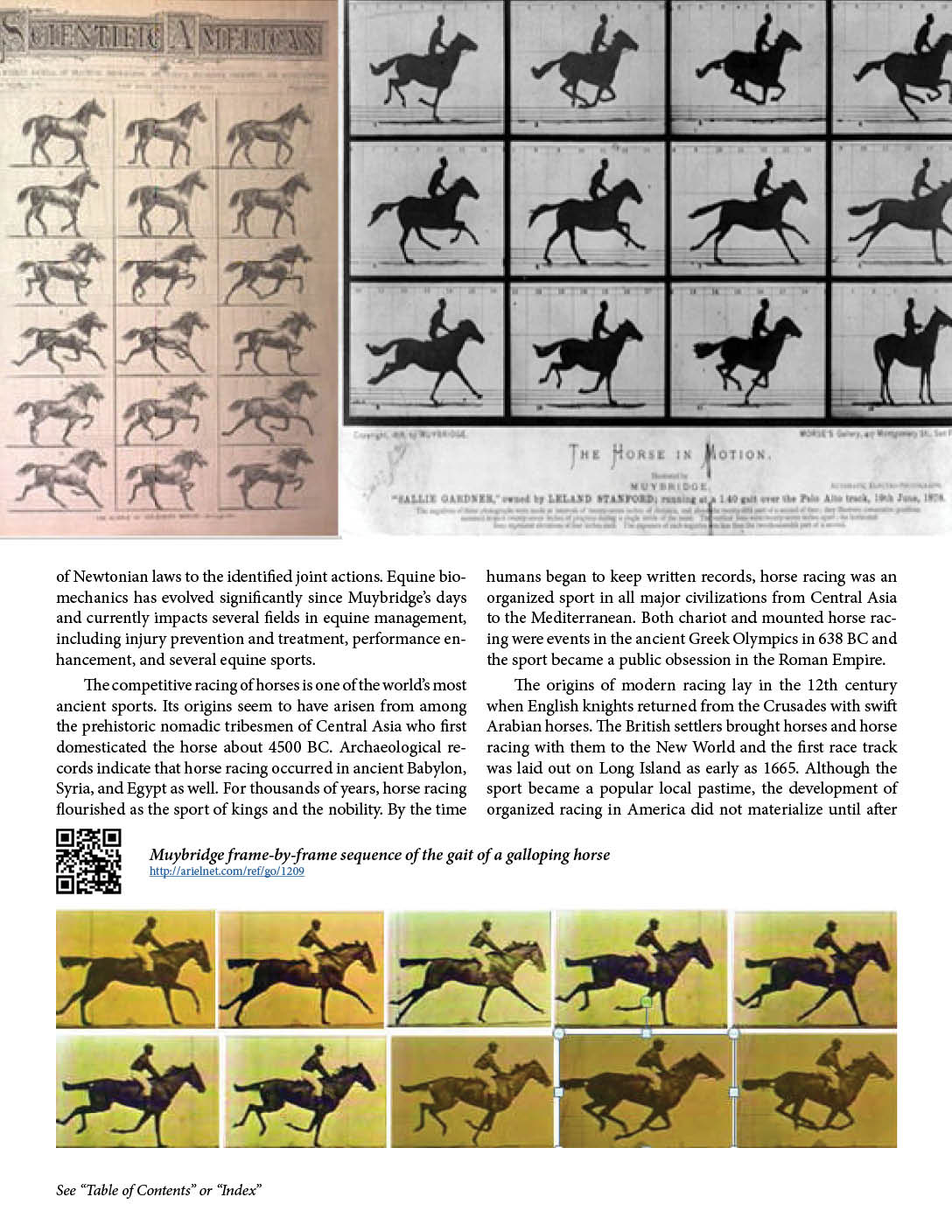 hight resolution of muybridge frame by frame sequence of the gait of a galloping horse http arielnet com ref go 1209