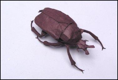 Goliath Beetle 2