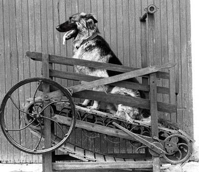 Blog Dog-Treadmill