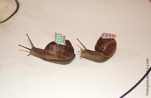 Snails Closeup