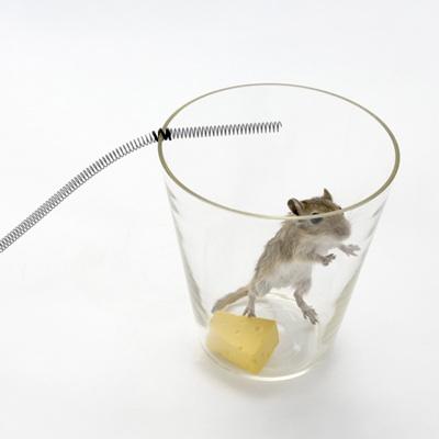 Mouse Trap35