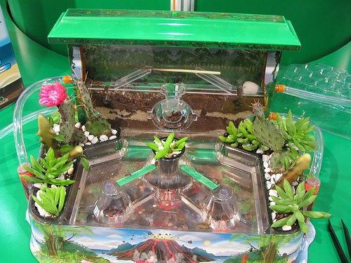 Triassic Triops Space Farms