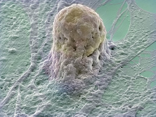 Image Article Content Stem Cell