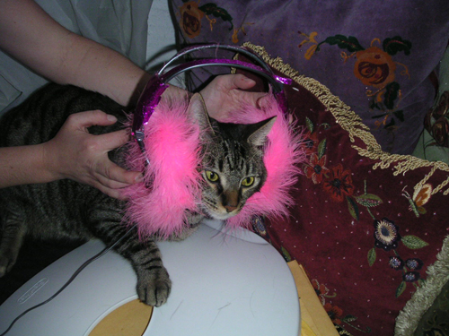 Headphones Kitty