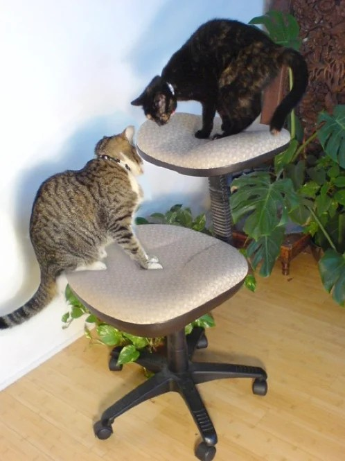 desk chair back support high stool gumtree 2 level cat bed made from an old | make: