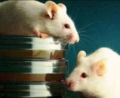 Morgen Images 2 White Mice Br
