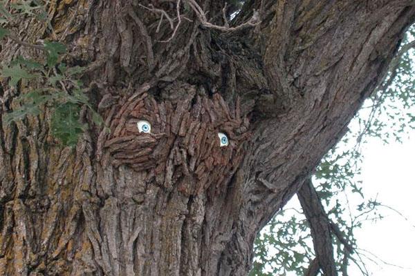 Treeeyes Bark
