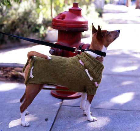 dogSweaterChron.jpg