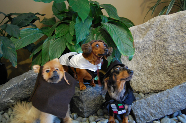 6874c427d77 HOW TO - Make Star Wars Halloween Costumes for Dogs | Make: