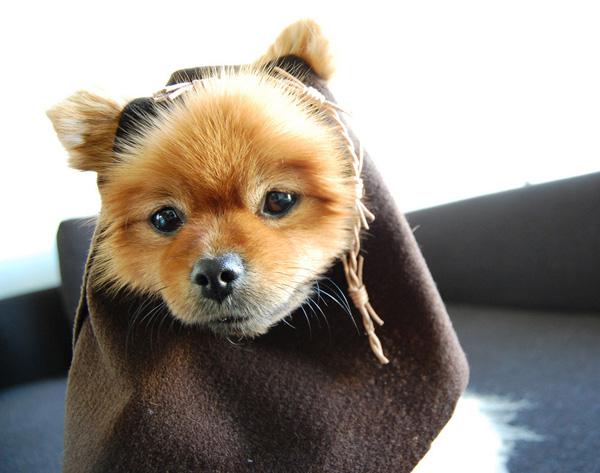 starwarsdogs_ewok.jpg. Ewok Costume  sc 1 st  Make Magazine & HOW TO - Make Star Wars Halloween Costumes for Dogs | Make:
