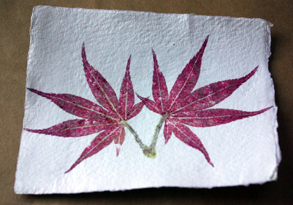 Simplebotanicalprints