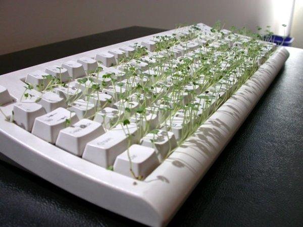 chia_keyboard_01.jpg