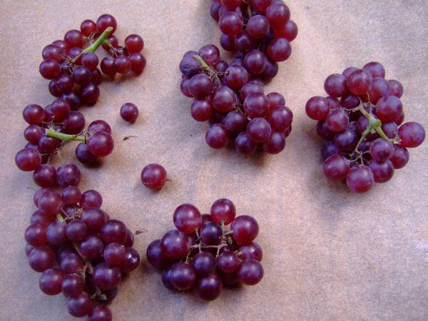 Sugared_Grapes_cutup.jpg