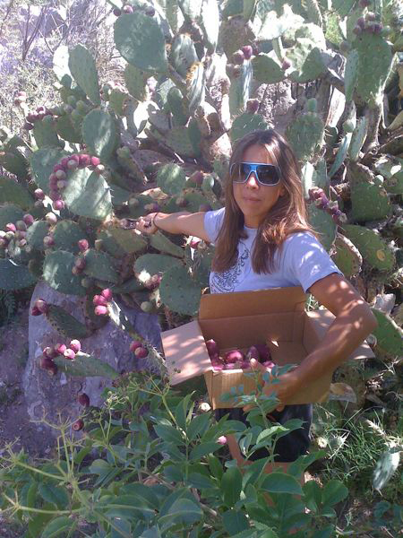 Pricklypear Picking
