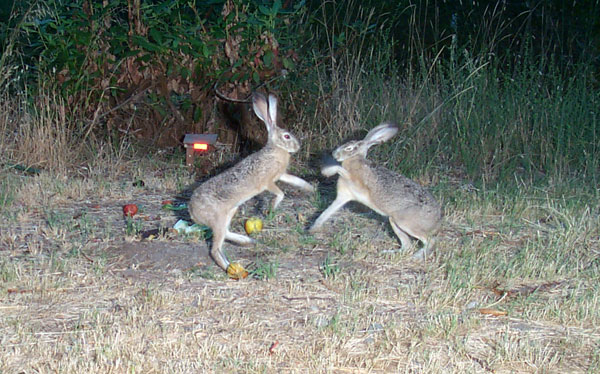 flashback-camera-rabbits.jpg