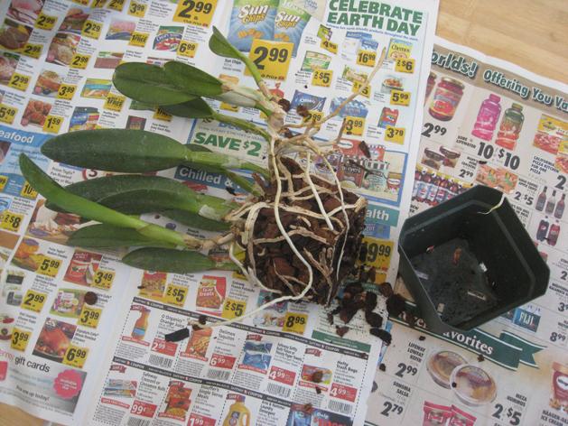 orchidrepot9.jpg