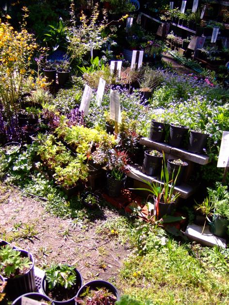gardenplanning_3.jpg