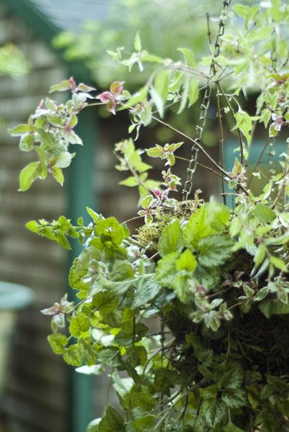 hanging_planter_0017.jpg