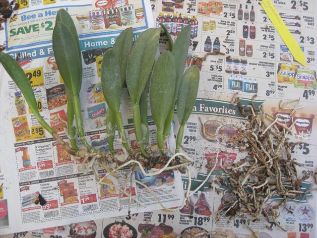 orchidrepot6.jpg