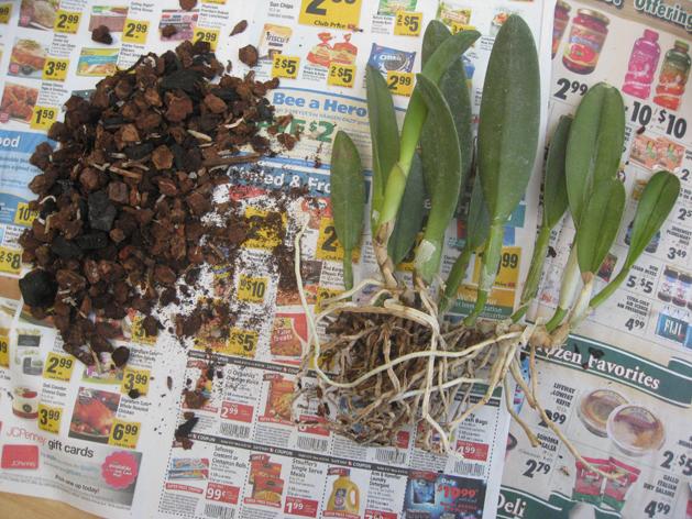 orchidrepot8.jpg