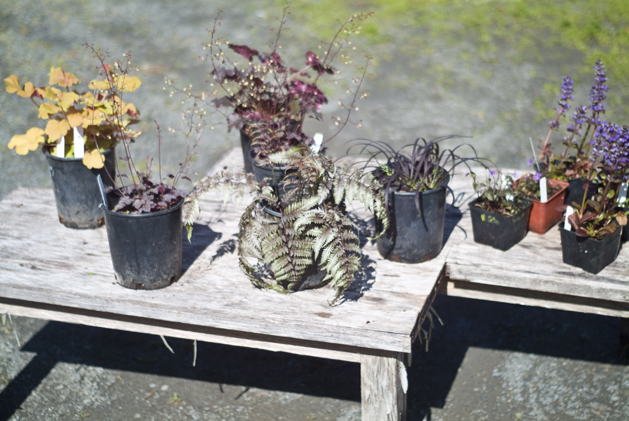 potted_plants_05.jpg