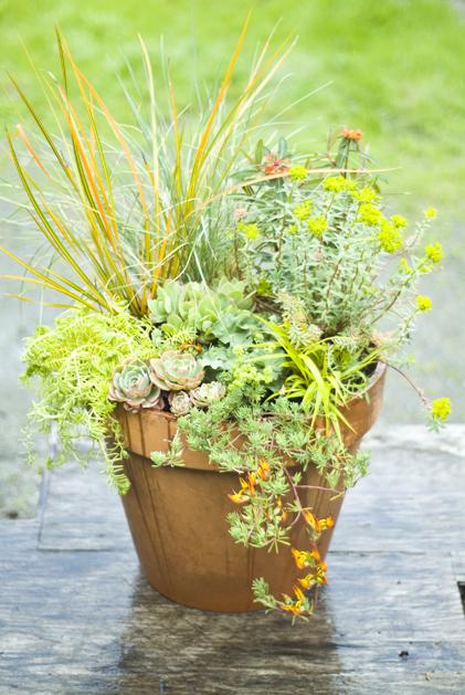 potting_plants_33.jpg