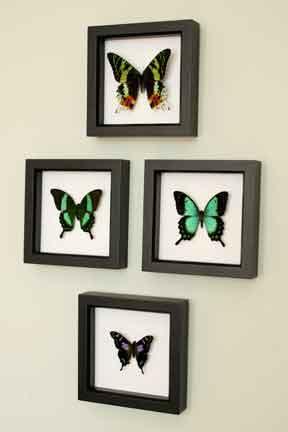 Baz_Biz_Bug_Under_Glass_butterflies.jpg