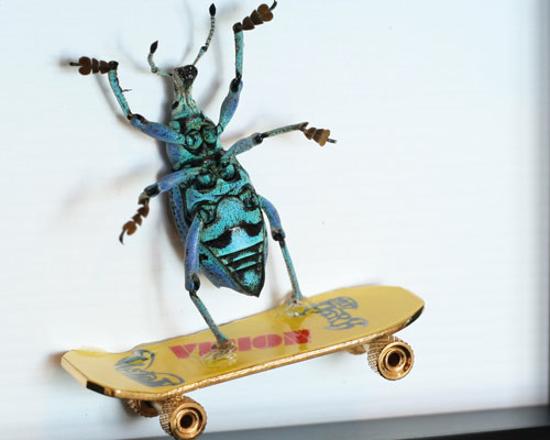 Baz_Biz_Bug_Under_Glass_skateboardbug.jpg