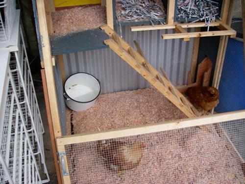 chick-in-a-box-3.jpg