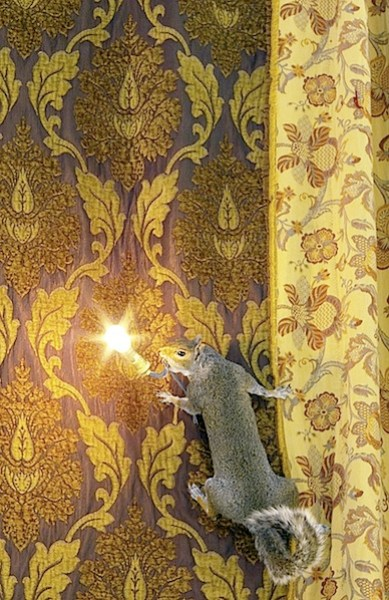 squirrelllamp.jpg