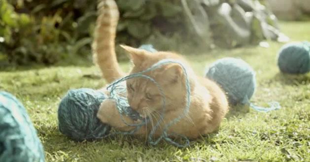 cat_yarn_commercial.jpg
