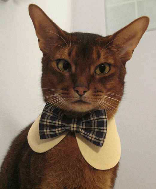 cat_bowtie_model.png