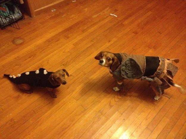 crocheted-skyrim-doggie-costumes-1.jpg