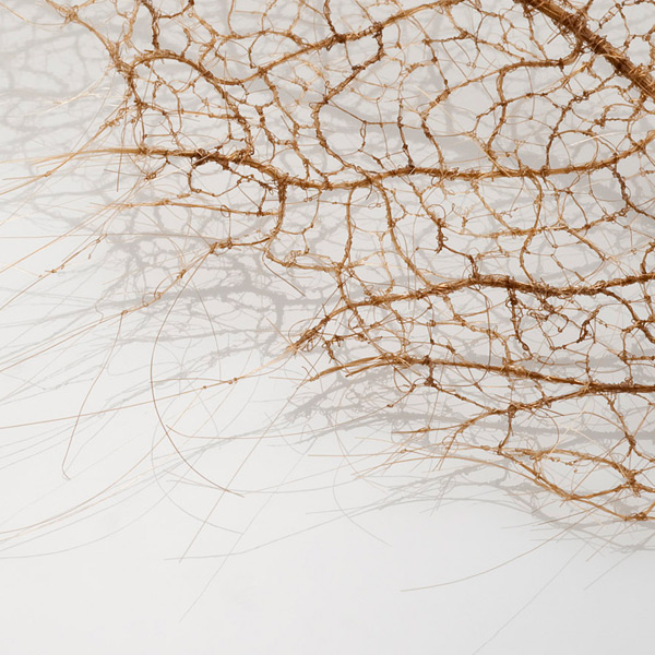 hairy-leaves-2.jpg