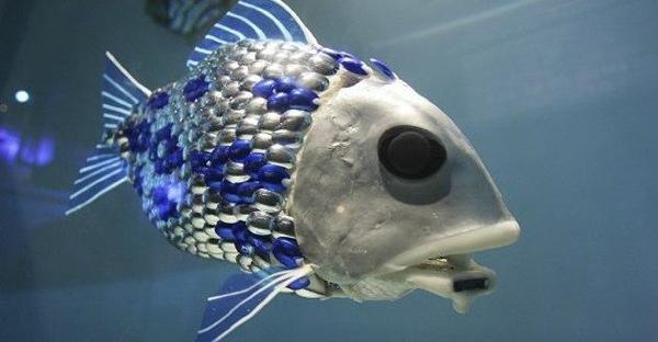 Mw-630-Schoal-Fish-630W