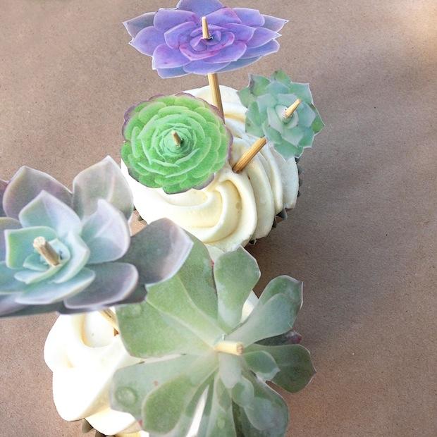 idontknowhowshedoesit_succulent_cupcakes_01
