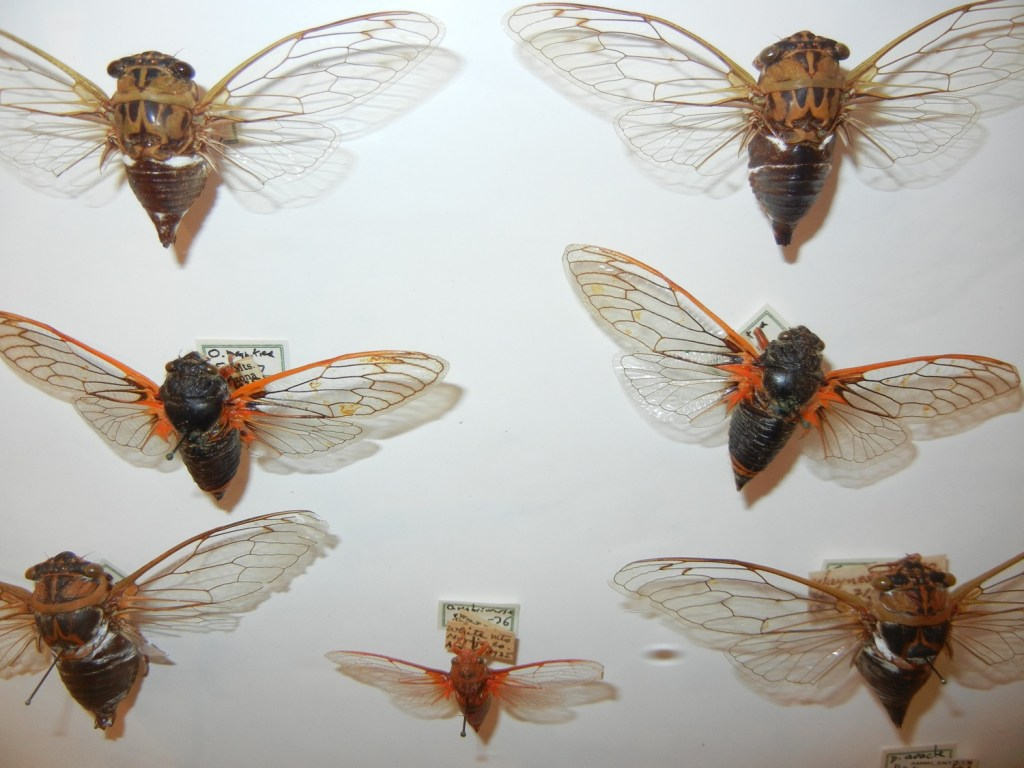 insect-display-1