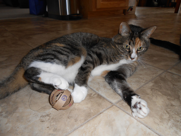 toilet-paper-roll-cat-toys