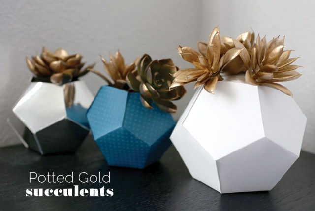 potted_gold_succulent