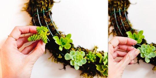 succulent wreath-2
