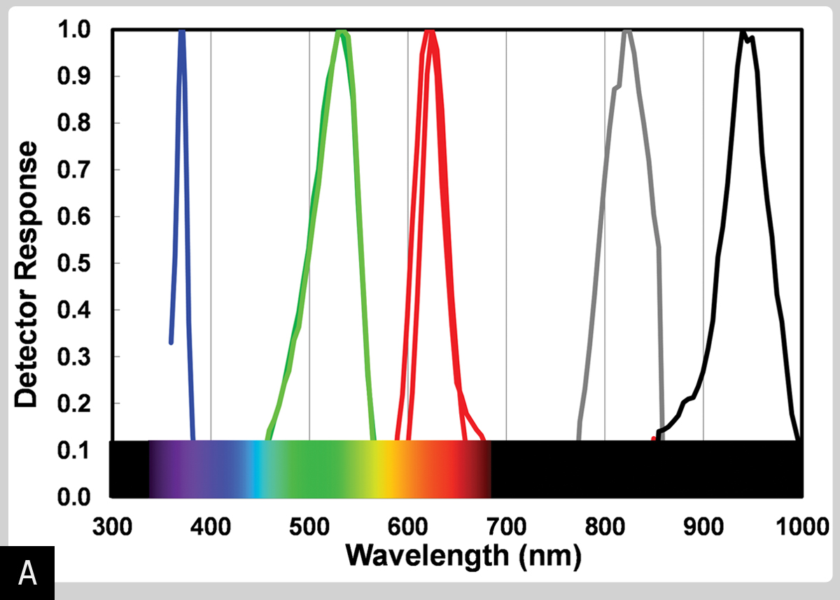 How To Use Leds Detect Light Make Just Do You A Color Sensor Figure Shows The Spectral Response Of 7 Blue Green Red And Near Infrared That Replace Usual Silicon Photodiodes Filters In My Modified