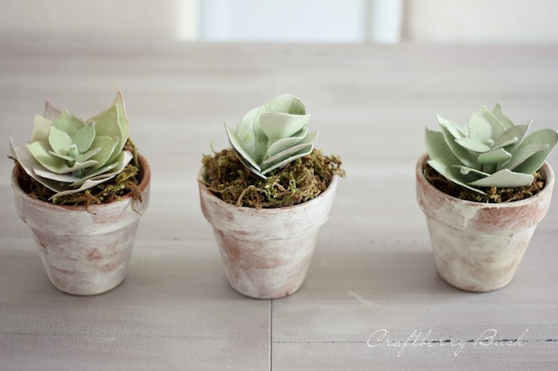 craftberrybush_paper_succulents_01