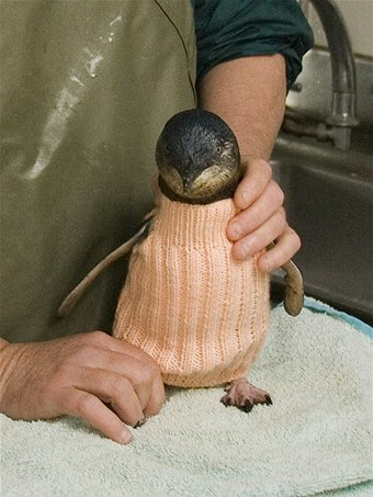 knitted-penguin-jumper-1