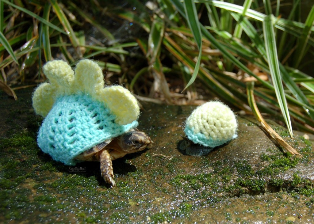 snail-cozy-1