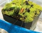 Biorobotics: Hack a Venus Flytrap for Remote Control