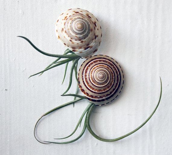 sea-urchin-planters-3
